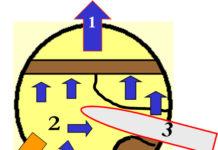 A) Schnittfolge im Querschnitt: 1) Fallkerbanlage; 2) Ausformen von Stützleiste und Bruchleiste mit einlaufender Kette auf der linken Seite; 3) Ausformen von Stützleiste und Bruchleiste mit auslaufender Kette auf der rechten Seite; 4) Stützkeil setzen; 5) Durchtrennen der Stützleiste mit ein- oder auslaufender Kette