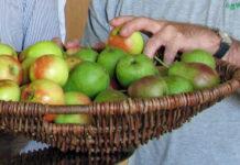An der Obstbörse wird Obst aus privaten Gärten vermittelt.