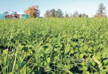 Das oö. Grünlandprogramm soll als kofinanzierte Maßnahme ins ÖPUL aufgenommen werden.