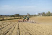 Eine gezielte Sortenwahl ist der Grundstein für ein erfolgreiches Maisjahr.