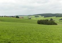 Der Erhalt des Dauergründlands ist eine von drei Greening-Maßnahmen.