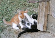 """Laut einer neuen Tierschutz-Regelung gilt auch für """"Katzen in bäuerlicher Haltung"""" die Kastrationspflicht."""
