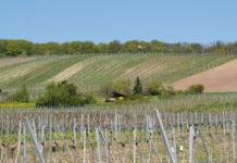 In der Novelle zum Weingesetz sind klare Angaben zu den Rieden als kleinstmögliche Herkunftsangaben für Weine festgehalten.