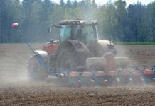 Obwohl die Maisaussaat in weiten Teilen Europas noch auf sich warten lässt