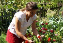 Gartenarbeit hat einen nicht zu unterschätzenden Erholungswert.