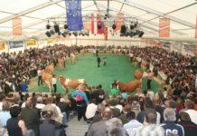 Qualifizierte Preisrichter sind eine Voraussetzung für korrekte Bewertungen und attraktive Rinderschauen.