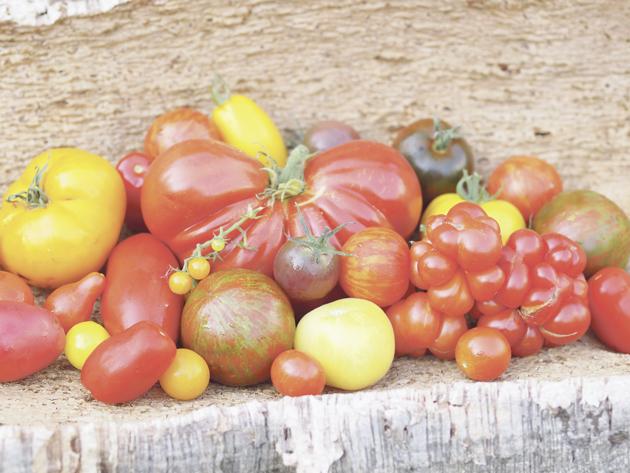 Lieblings Tomaten - die Äpfel aus dem Paradies - Bauernzeitung &XY_38