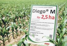 Diego M mit starker Blatt- und Bodenwirkung im Nachlauf
