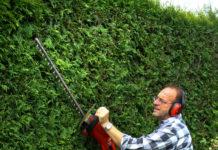 Hecken schön gerade schneiden: Orientieren Sie sich an einer Hilfslinie