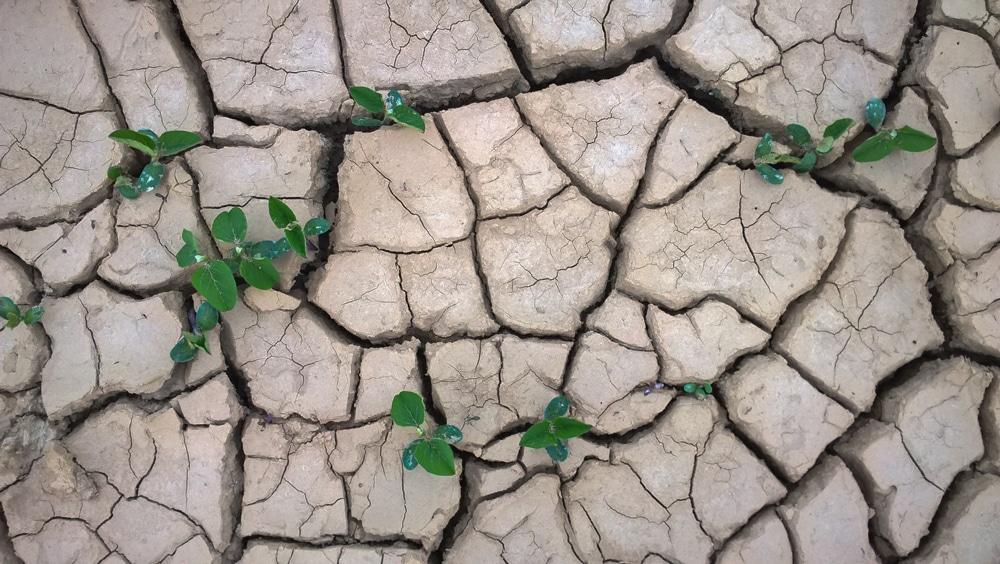 Trockenheit borkenk fer frost st rme machten 2017 den for Boden 20 prozent