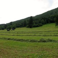 Bio-Grünland zu verpachten