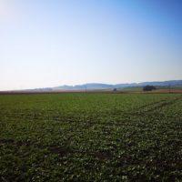 1-2 ha Ackerland zu verkaufen