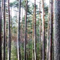 2,52 ha Wald Raum Gr. Gerungs