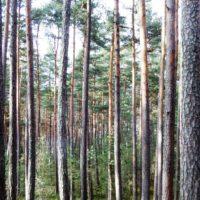 1,18 ha Wald bei Gr. Gerungs